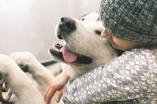 Conselhos para tratar a ansiedade em cães