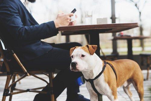 arnês para cães