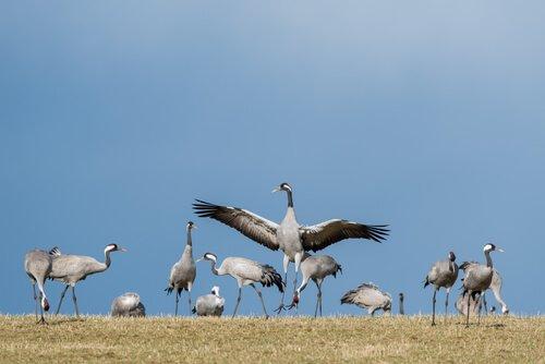 6 aves migratórias que você deve conhecer