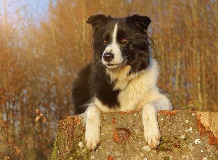 Anti-inflamatório em cães e gatos: um risco mortal