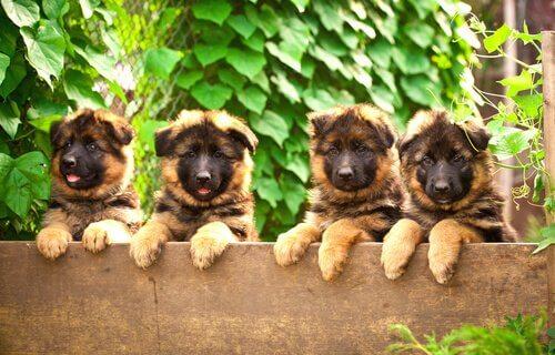 Filhotes de cachorro sobre cerca