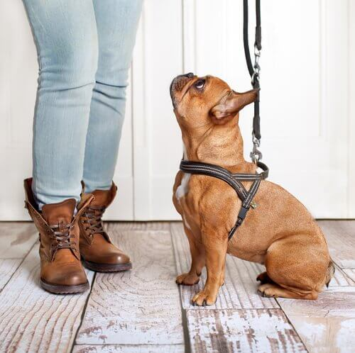 cachorro sair para passear