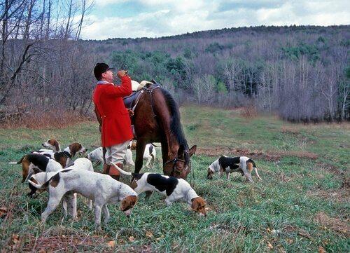 Caçador com seus cães