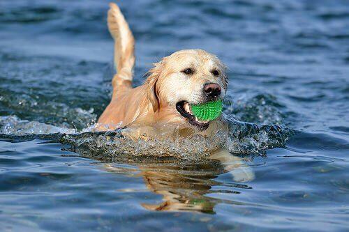 Brincar com bola: como ensinar o cão a não ficar ansioso