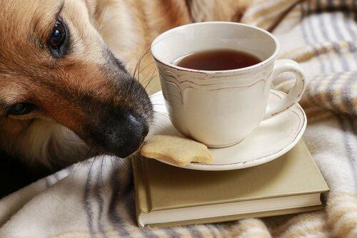 Evitar que seu cão roube comida: algumas dicas