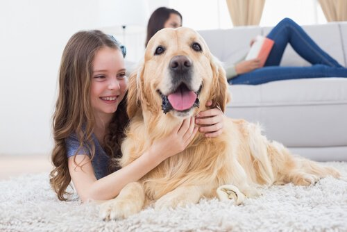 Cachorro recebendo carinho de uma menina