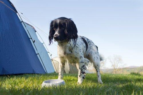 Cachorro com barraca de camping