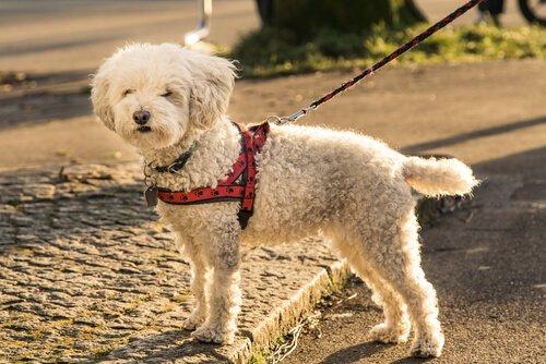 Tipos de arnês para cães