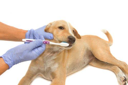 Os 6 melhores produtos para cuidar dos dentes dos cães