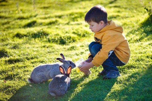 Criança dando de beber a coelhos