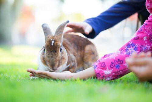 Os animais com a vida mais curta