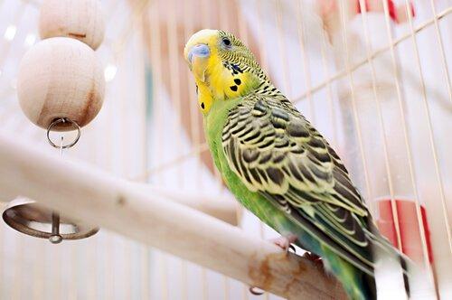 5 doenças de pássaros enjaulados