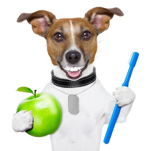 escovar os dentes dos cães