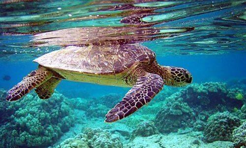 8 espécies diferentes de tartarugas