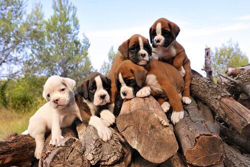 Filhotes de cachorro sobre pilha de madeira para lenha