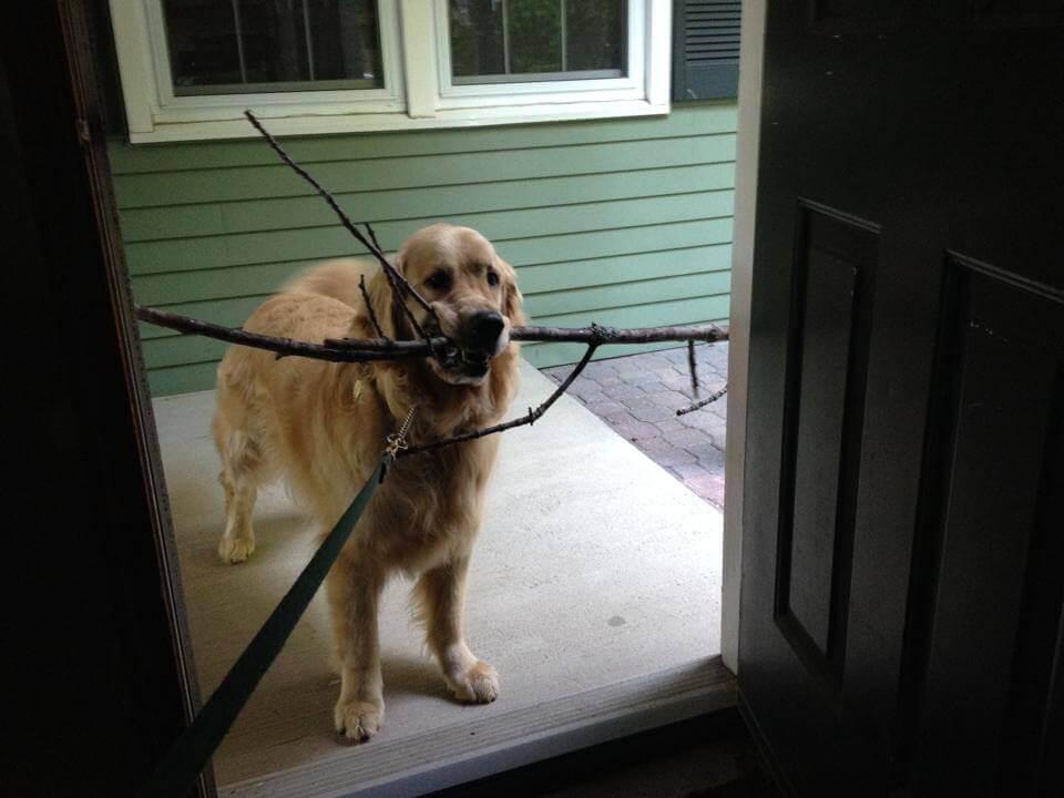 fotos divertidas do cão