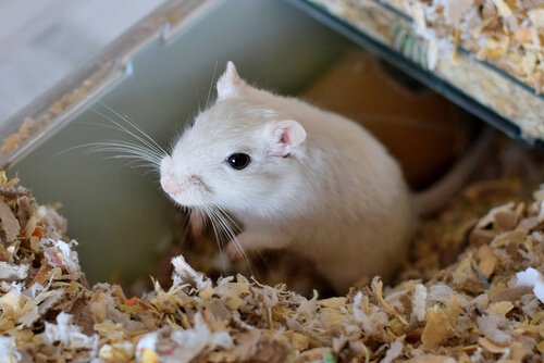 Gaiolas para hamsters: como escolher uma?