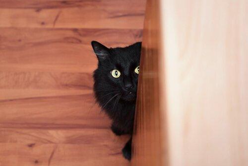 gato assustado