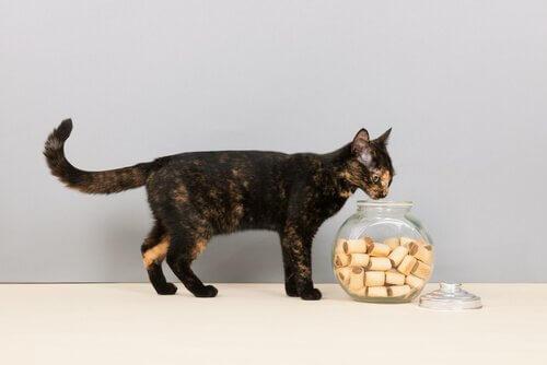 Gato com pote de biscoitos