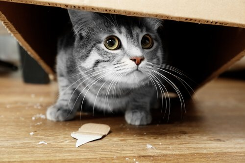 gato quebrando coisas