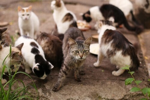 Colônia de gatos de rua