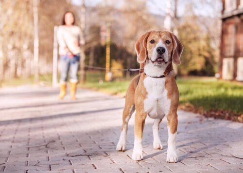 Sete tipos de guias para cachorros