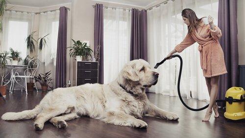 Como manter a casa limpa tendo animais de estimação