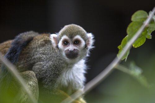 Será que viemos do macaco?