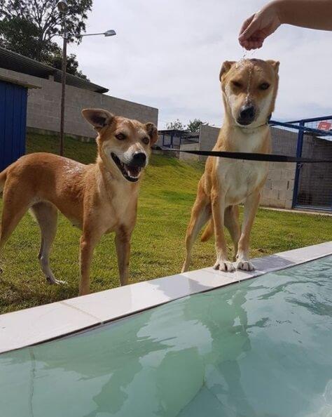 Cães na piscina da ONG Paraíso dos Focinhos