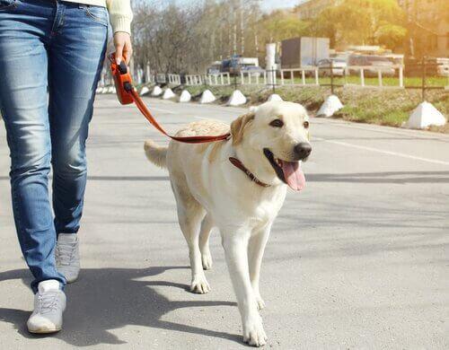 passear com cão