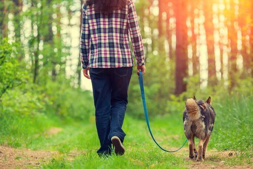Quatro maneiras de melhorar o passeio com seu cão