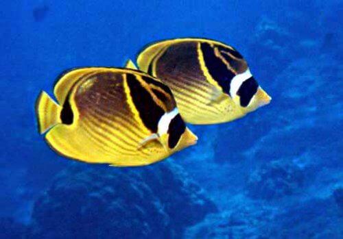 peixes de água quente