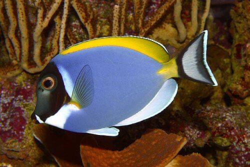 7 peixes de água quente