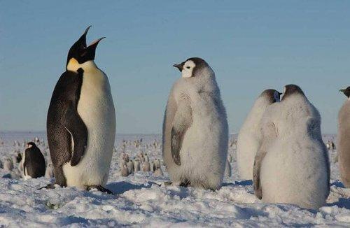 Pinguins e suas dificuldades