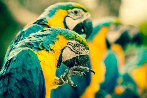 piolho em pássaros