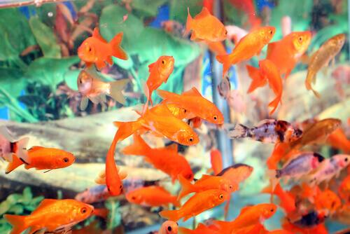 Principais problemas de um aquário