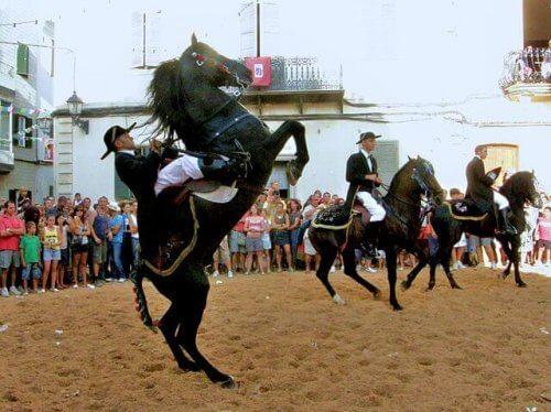 Conheça as raças de cavalo espanholas