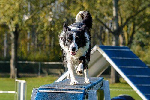8 regras não escritas dos parques para cães