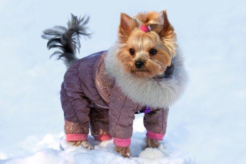 Yorkshire de casaco de neve