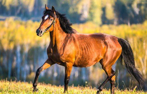 saúde do cavalo