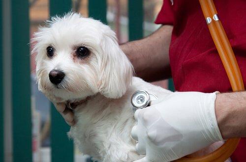 seguro saúde para cães