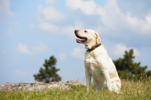Terapia psicológica com cães e gatos: você já viu?