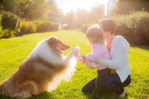 Terapia psicológica com cães e gatos