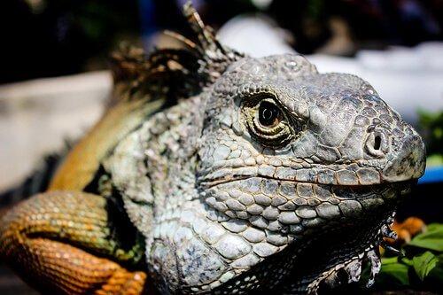 animais selvagens da amazônia conheça alguns deles