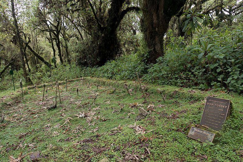 Túmulo de Dian Fossey
