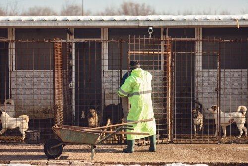 Voluntário trabalhando em abrigo de animais