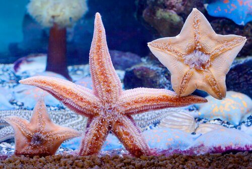 Estrelas do mar em aquário