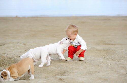 Bebê com filhotes de cachorro