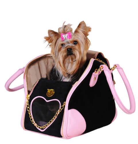 Yorkshire terrier numa bolsa