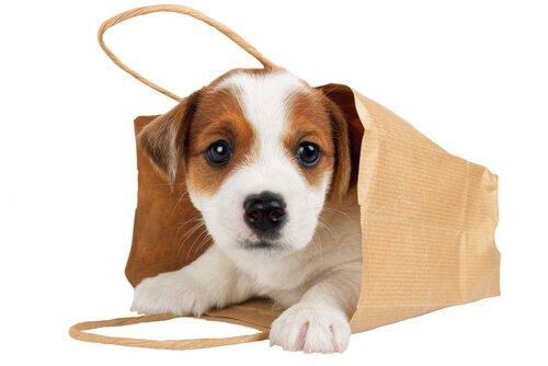 É bom transportar o seu cão numa bolsa?